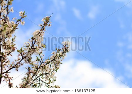 tree with lush colors on background blue sky in spring / beautiful time of the year
