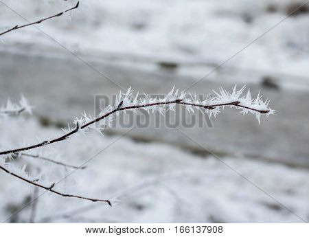Bush branches covered by frost crystals, cold winter weather