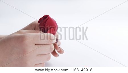 female teen hand tearing red rose flower on white background, 4k photo