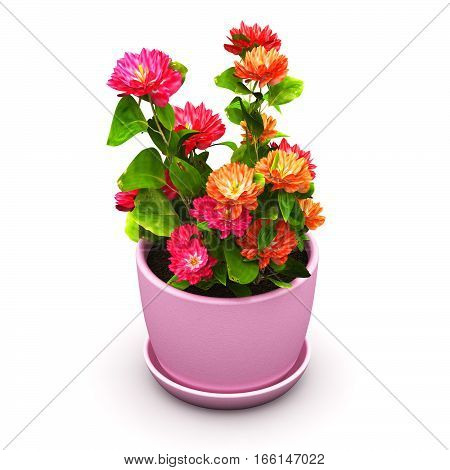 3D render illustration of red and orange flowers plant in pink domestic ceramic flower pot isolated on white background
