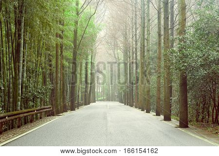 View of the asphalt road in the bamboo forest of Huangshan national park