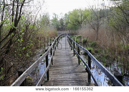 Walkway or wooden walkway to cross the swamp
