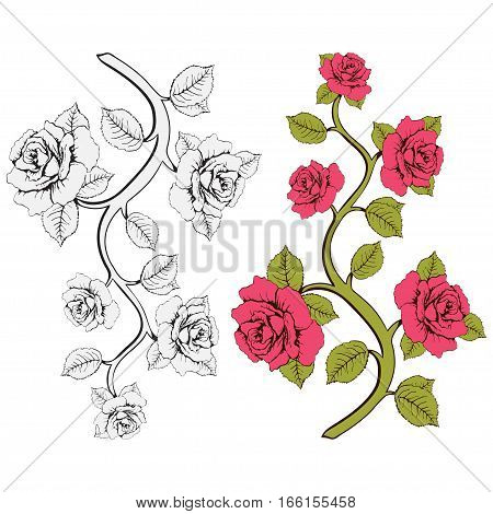 Flower Branch Roses. Set Of Pink And White  Branches. Floral Print. Ornament With .  Frame,  Card, B