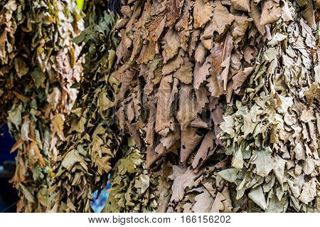 Photo of lot oak besoms for Russian banya at market place