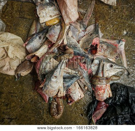 Carcasses of fish head at ground floor of traditional market photo taken in Jakarta Indonesia java