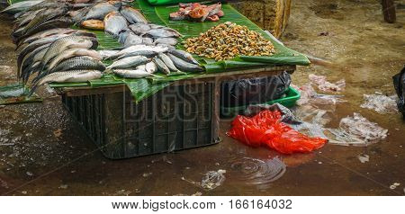 Various kind of fish sold in traditional market photo taken in Jakarta Indonesia java