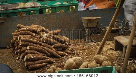 Cassavas and sweet potatoes sold in Pasar Minggu traditional market photo taken in Jakarta Indonesia java