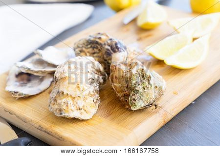 Raw oysters closed shells with lemons on wooden cutting board