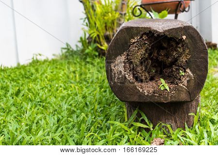 hollow logs and grass for seating in garden