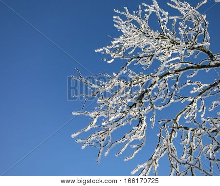 frozen tree branch with winter snow on blue texture