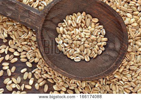 Spelt grain over wooden spoon - macro