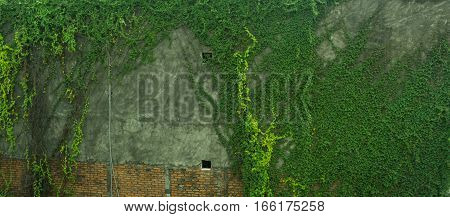 A green mossy wall made from bricks and cement photo taken in Jakarta Indonesia java
