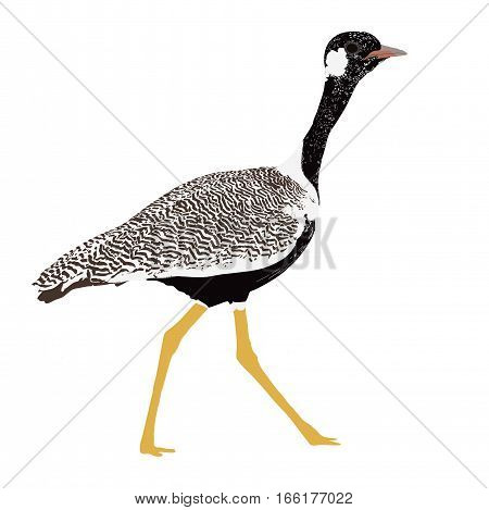 Double Banded Courser Bird