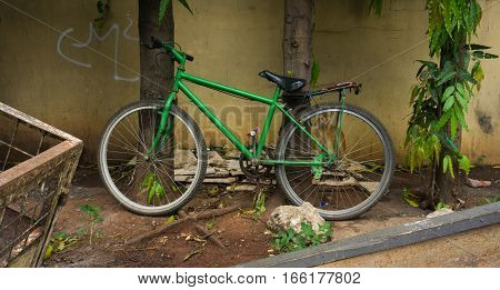 Green bicycle lean on tree photo taken in Jakarta Indonesia java