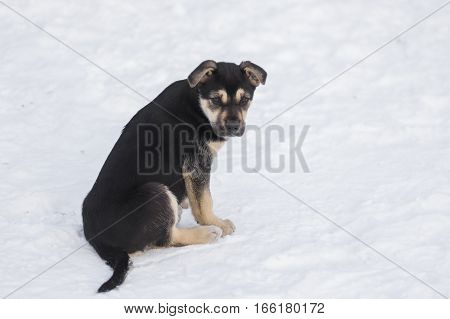 Cute stray black puppy sitting on a snow