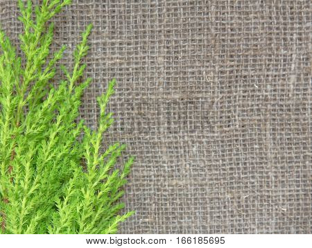 Natural background in rustic old style of eco material with a branch of green cypress