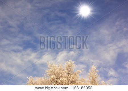 Winter Sky, Bright Sun, Snow-covered Tree Branches On A Background Of Clouds