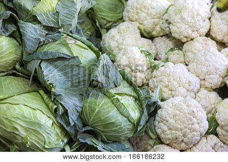 Heads of cabbage a large background in the market