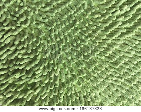Texture of the green fabric on the floor.