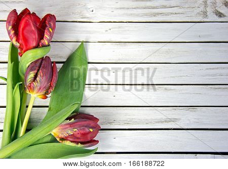 fancy red tulip bouquet on whitewashed wood