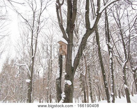 Wooden nesting box on a tree in the wood in the winter