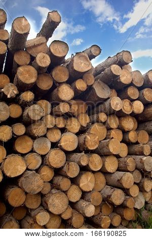 Many stacked in pile of pine logs over blue sky with white clouds, vertical photo, side view close-up