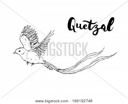 Hand Drawn Graphic Isolated Bird Quetzal With Handwritten Words Lettering On White Background