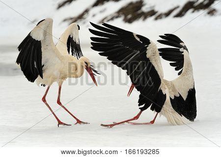 Stork In The Winter Park