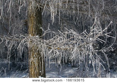 winter branches of trees in hoarfrost glint in the sun. The fine winter mountains landscape. Sunny day.