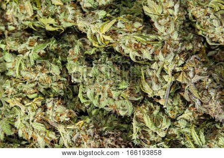 Dry green organbic cannabis buds background flatlay