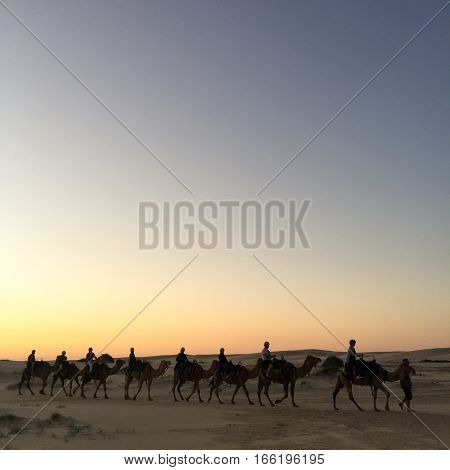 Vintage retro effect filtered hipster style image of Rajasthan travel background - indian cameleers (camel drivers) with camels silhouettes in dunes of Thar desert on sunset. Rajasthan India