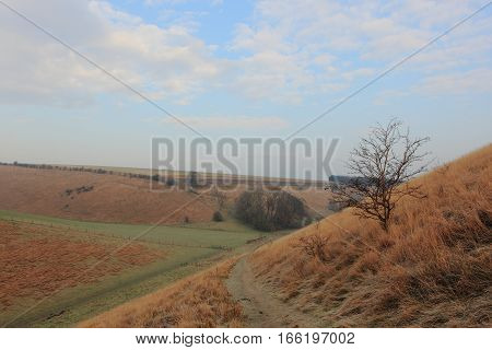 English landscape in winter with a hawthorn tree and golden frosted grasses by a trail through the scenic Yorkshire wolds valleys in January