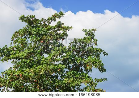 Clear sky with clouds and green tree.