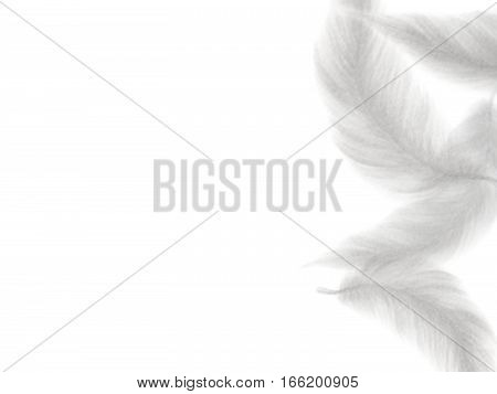 Hand drawn feather on white background- Watercolor painting