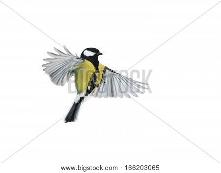 bird flying on a white background is widely spread its wings and feathers