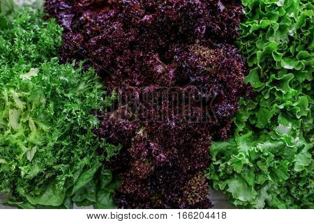 Fresh lettuce salads lollo rosso red and green, escarole endive or frisee salad on a counter for sale in a grocery store. Variety of three fresh lettuce salads. Horizontal.