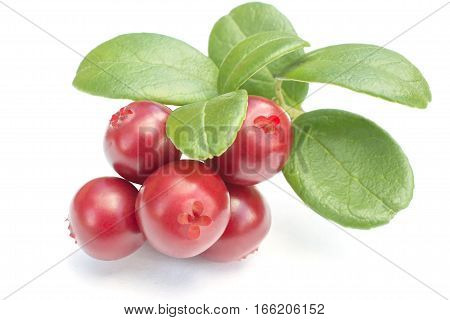 Cowberries - cranberries with leaves on the white background isolated