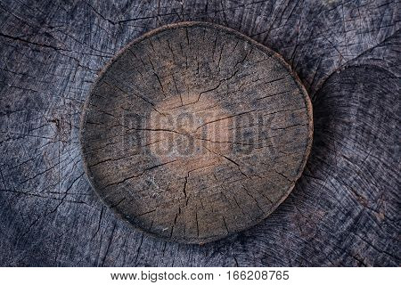 Tree trunk cross section with tree rings. Background texture of natural wood. cold tone