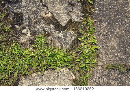 Filtered Green Grass Growing Through Concrete With Copy Space