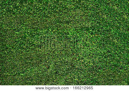 Green grass bush leaves background for designer