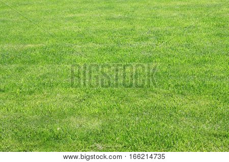 Background image of lush green grass field