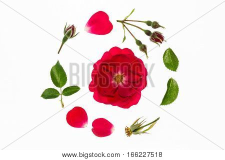 red rose flowerhead, petals and leaves arranged in circle on white background