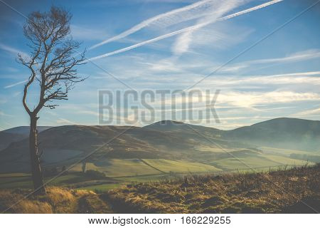 Windswept Landscape In Scotland With Trail And Lone Tree