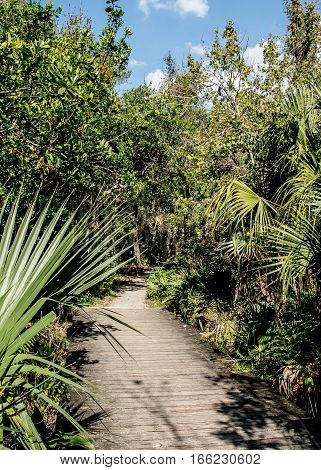 A WOODEN FOOT BRIDGE TO A DIRT PATH INTO THE PALMETTO SCRUB