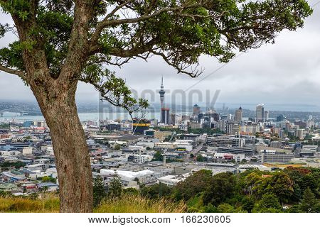 Scenic View Of Auckland Skyline With Trees In Foreground, New Zealand