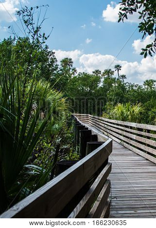 PALMS ON THE BOARDWALK - A WOODEN WALKWAY WITH PALM TREES AND PALMETTOS poster