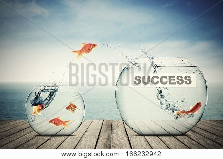 Picture of goldfish leaping to another aquarium with success word concept of better business