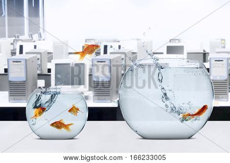 Picture of goldfish moving to larger fishbowl on the table shot in office