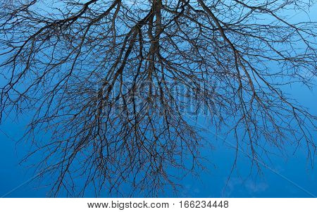 Black tree branches extending across the sky