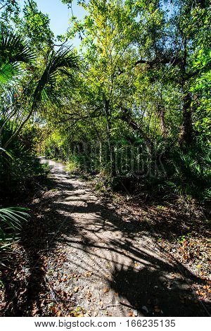 SHADOWED DIRT PATH THROUGH THE FLORIDA WOODS